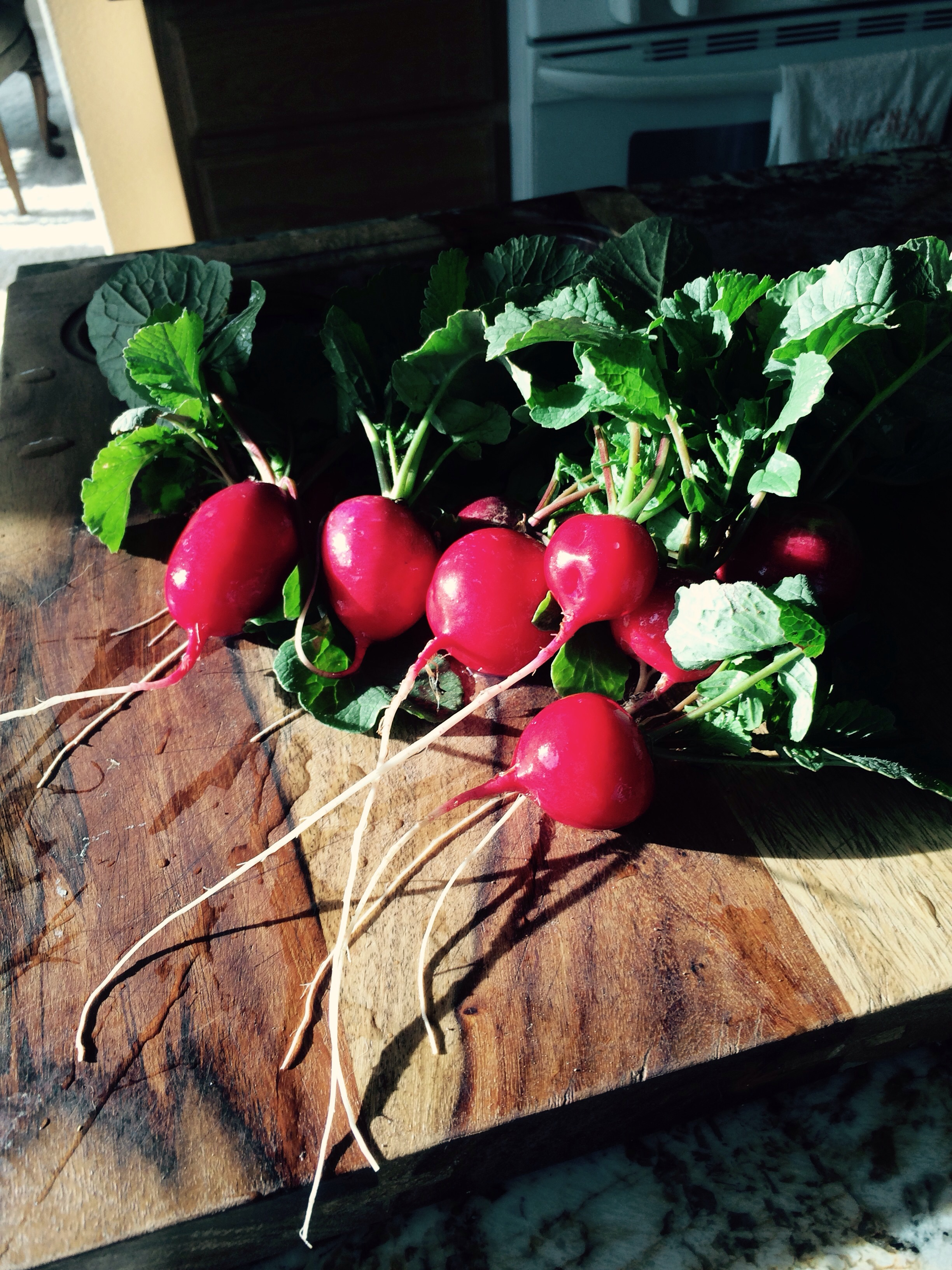 This mornings harvest we got 5 pounds of salad greens and the rube red sora bio dynamic radishes
