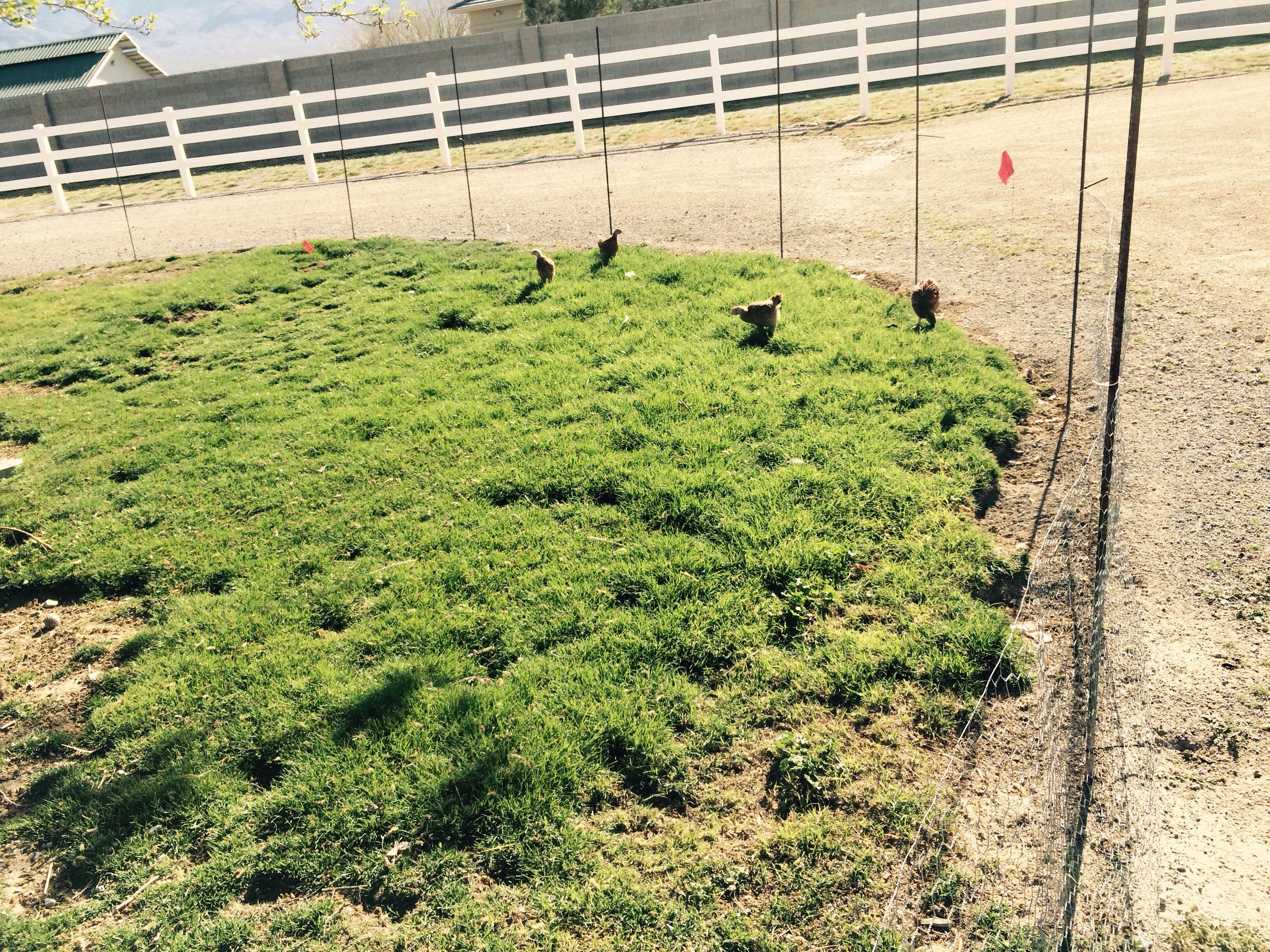 They enjoy running around the pasture