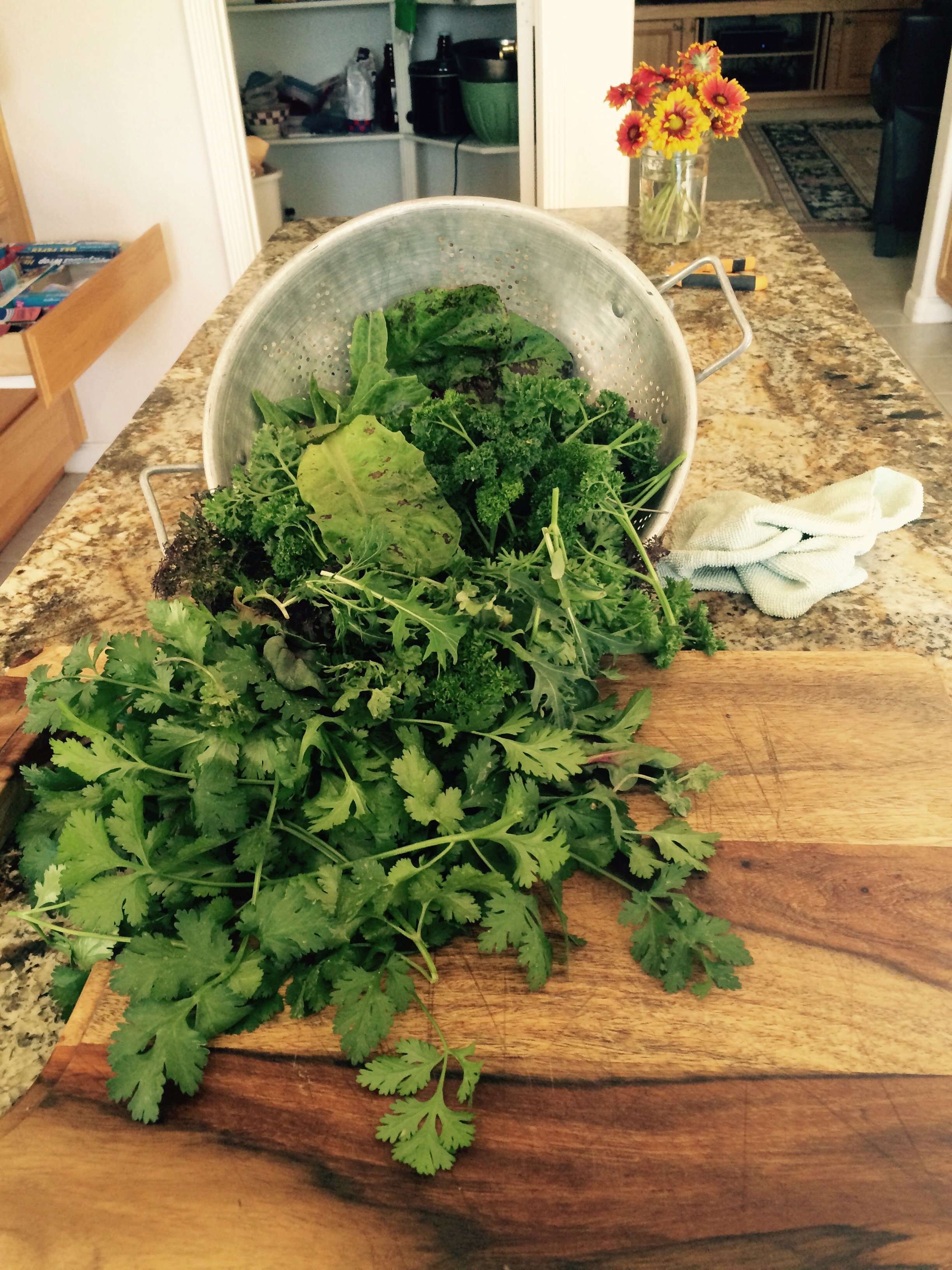 There is no taste better than fresh out of the garden parsley and greens