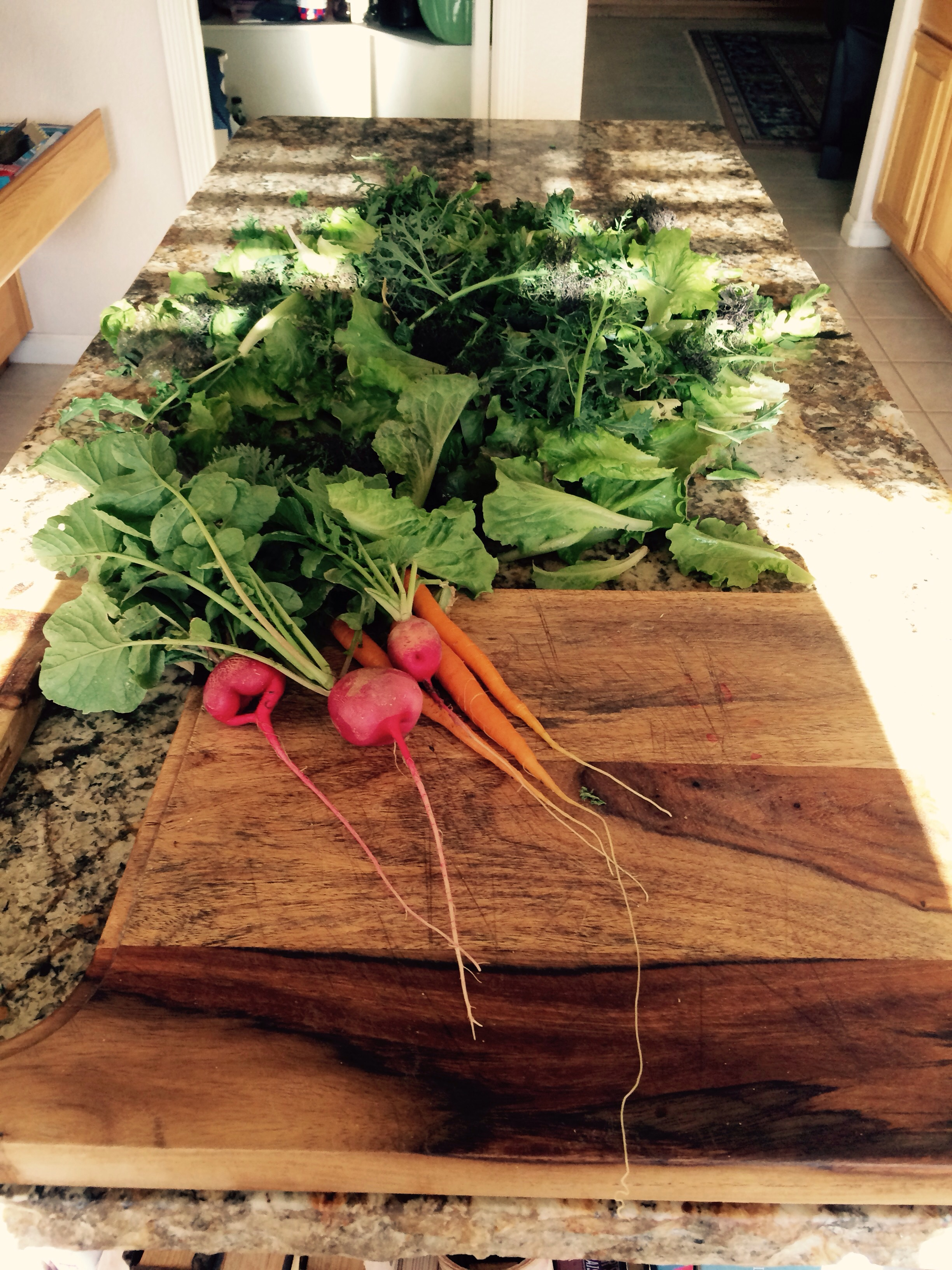 Take note of roots on carrots and radish that's a testament on how good our soil is getting we had tons of kales and wonderful salad mixes