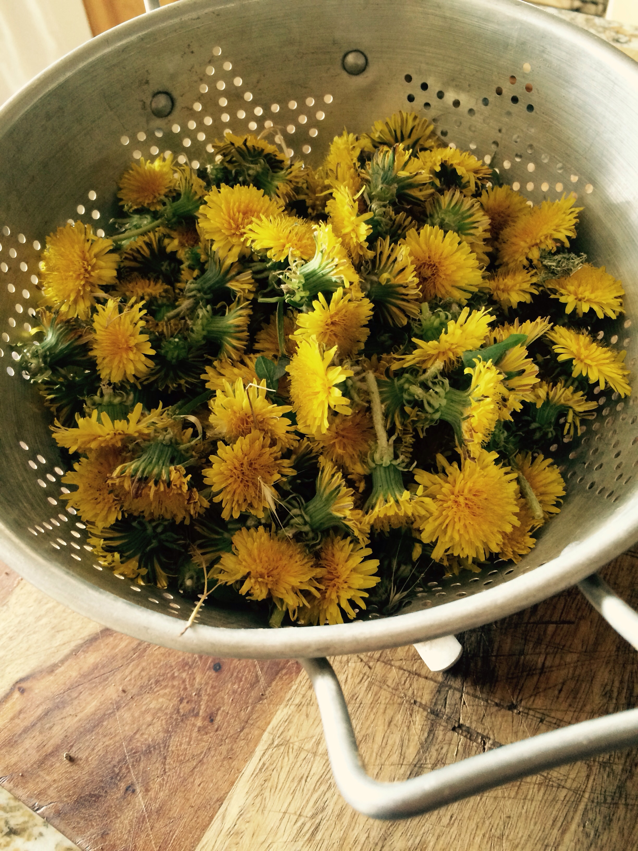 One of my daily chores I try and pick a bowl of these flowers as we are drying them and going to send them to the Joseiphine  porter instatute where they make bio dynamic perpetrations that we use in our gardens