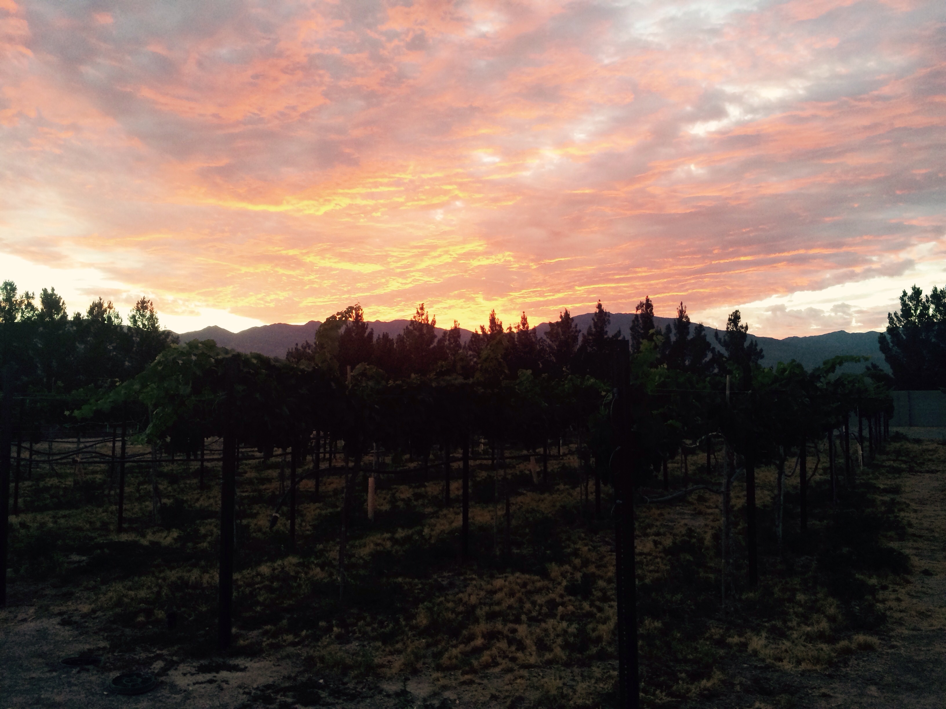 This is the views I got as I fed the animals beautiful sunrise