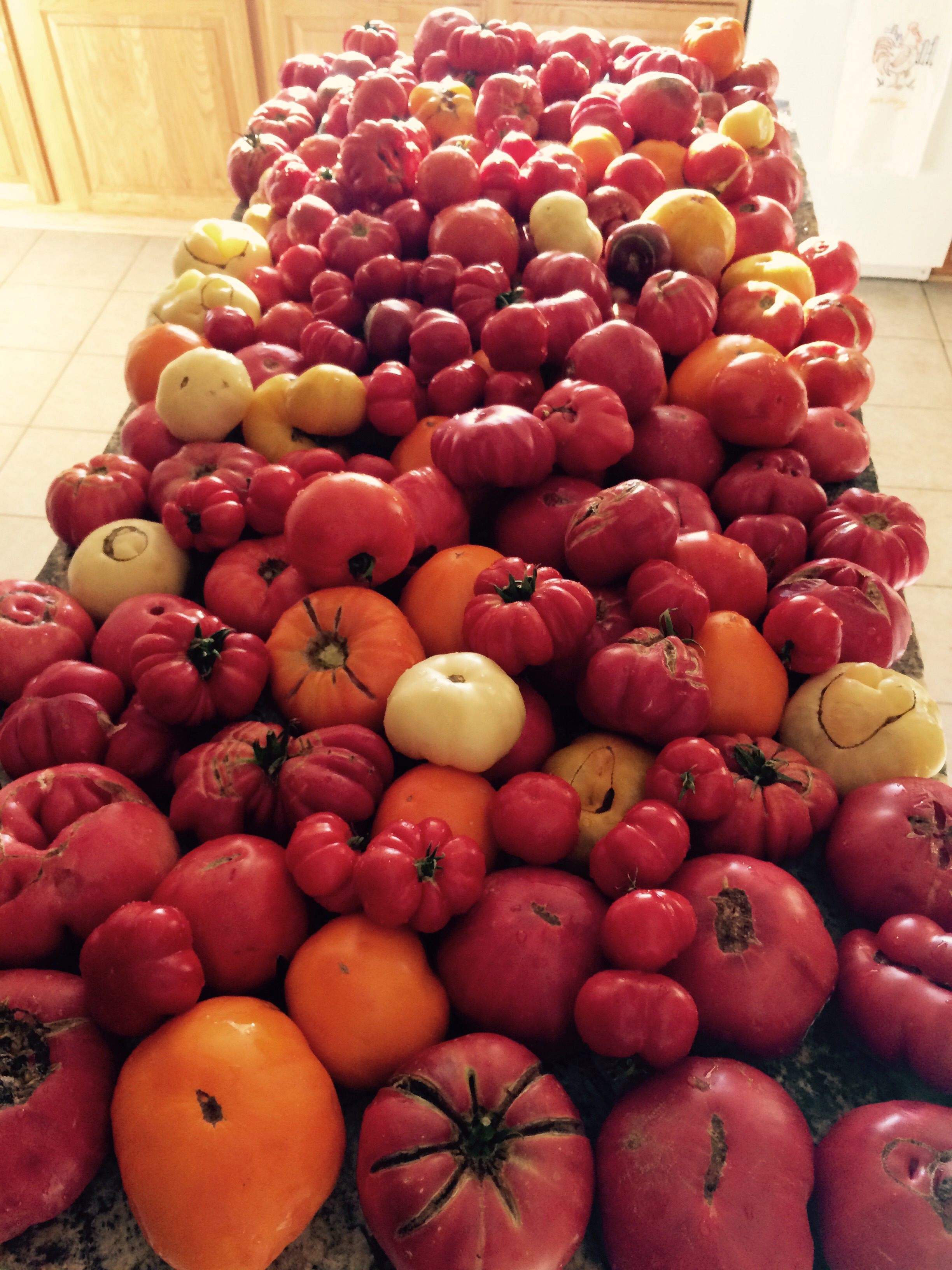 We have reached record amounts of hierloom tomatoes on our farm this year