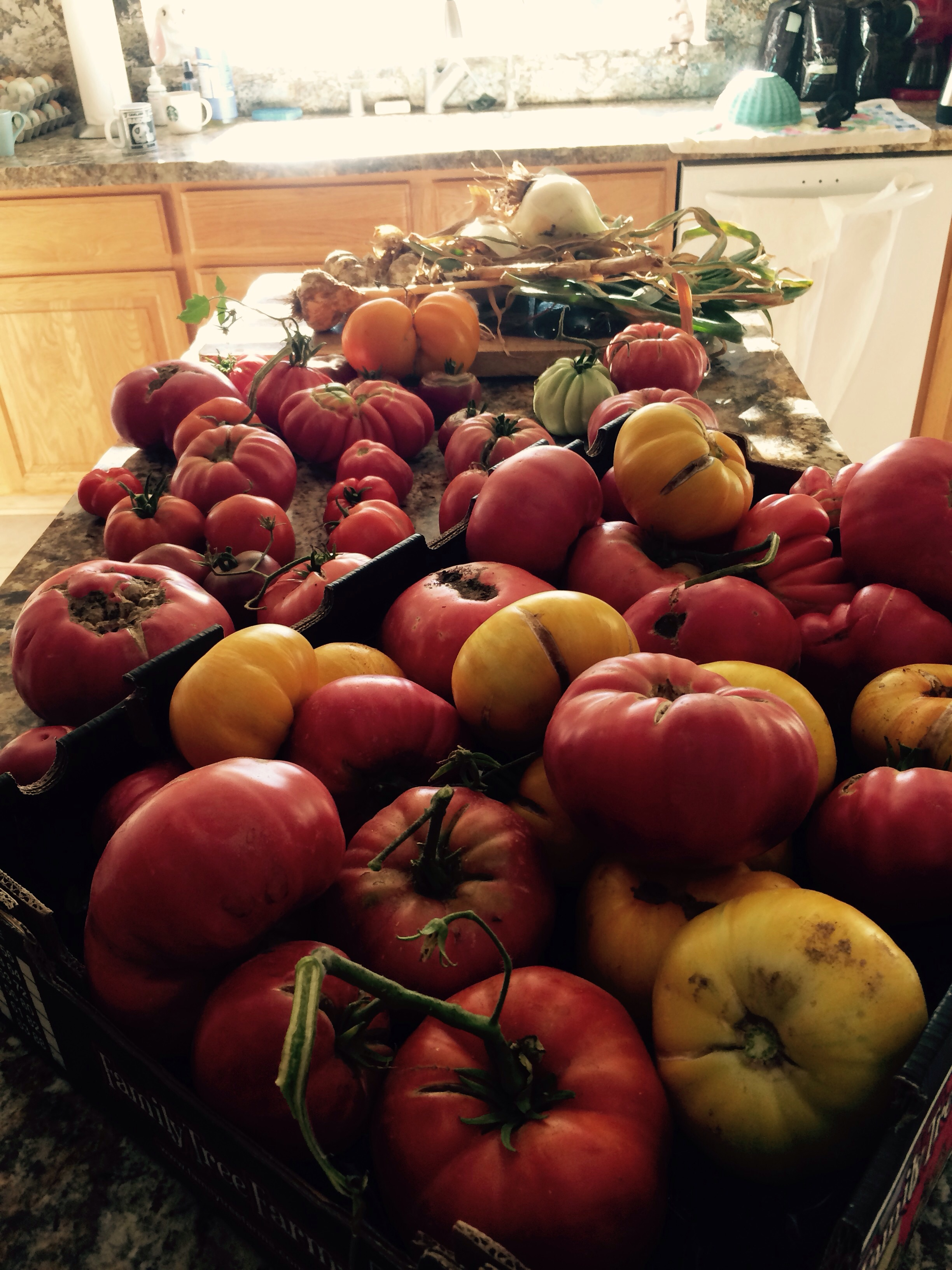 We harvested 39 pounds of heirloom tomatoes along with walla walla onions and garlic going to make  12 quarts heirloom tomatoes sauce and freeze then can a batch this weekend